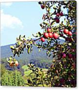 Apples On A Tree Canvas Print