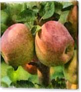 Apples Painterly Canvas Print