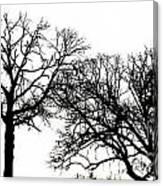 Arboreal Mind Meld Canvas Print