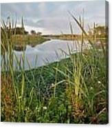 Arcata Marsh Canvas Print