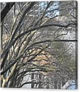 Arched Trees Canvas Print