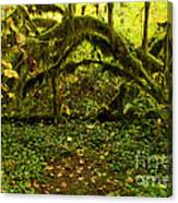 Arches In The Rainforest Canvas Print