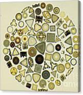 Arrangement Of Diatoms Canvas Print