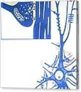 Artwork Of A Nerve Cell Of The Brain & A Synapse Canvas Print