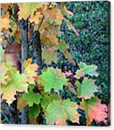 As The Leaves Turn Canvas Print