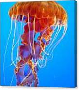 Ascending Jellyfish Canvas Print