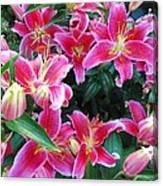 Asiatic Lillies Canvas Print