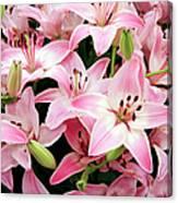 Asiatic Lily (lilium 'vermeer') Canvas Print