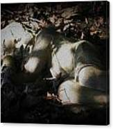 Asleep In The Leaves Canvas Print