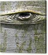 Aspen Eye Canvas Print
