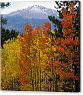Aspen Grove And Pikes Peak Canvas Print