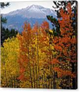 Aspen Grove And Pikes Peak Canvas Print