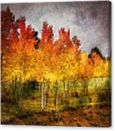 Aspen Grove In Autumn Canvas Print