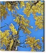 Aspen In The Sky Canvas Print