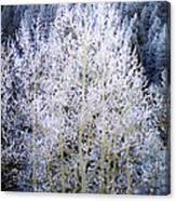 Aspen Lace Canvas Print