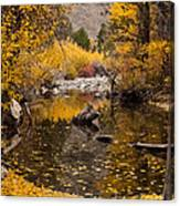 Aspen Leaves On Stream Canvas Print