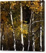 Aspen Palate Knife Canvas Print