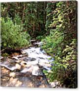 Aspen Stream Canvas Print