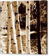 Aspens S L Canvas Print