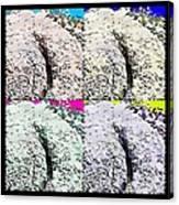 Ass Crack Rock In Quad Colors Canvas Print