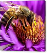 Aster Bee Canvas Print