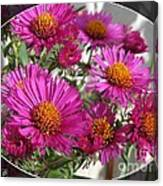 Aster Named September Ruby Canvas Print