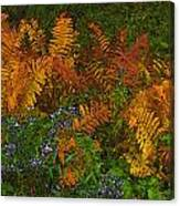 Asters And Ferns Canvas Print