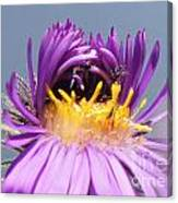 Asters Starting To Bloom Close-up Canvas Print