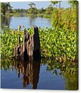 Atchafalaya Basin 21 Canvas Print