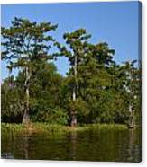 Atchafalaya Basin 41 Canvas Print