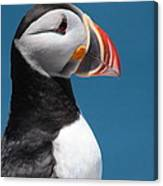 Atlantic Puffin Canvas Print