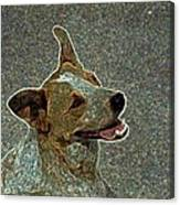 Australian Cattle Dog Mix Canvas Print