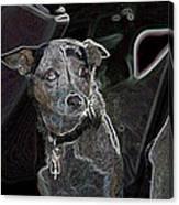 Australian Cattle Dog Sheltie Mix Canvas Print