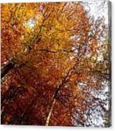 Autum Colours Canvas Print