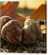 Autumn Acorns Canvas Print