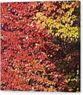 Autumn Arrival Canvas Print