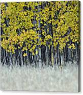Autumn Aspen Grove Near Glacier National Park Canvas Print