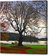 Autumn At British Camp Canvas Print