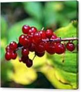 Autumn Berry Canvas Print