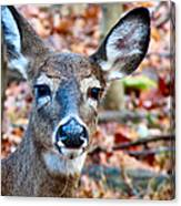 Autumn Buck Canvas Print