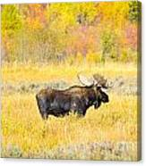 Autumn Bull Limited Edition Canvas Print