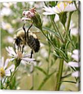 Autumn Bumblebee And Flowers Canvas Print