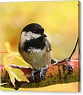 Autumn Chickadee Canvas Print
