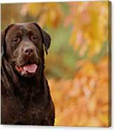 Autumn Chocolate Canvas Print