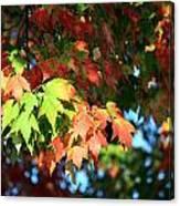 Autumn Color Medley Canvas Print