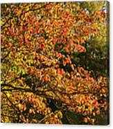 Autumn Colors In Pa Canvas Print