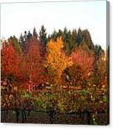 Autumn Colors In The Vineyard Canvas Print