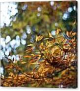 Autumn Crescendo Canvas Print