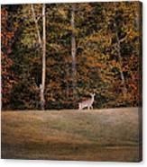 Autumn Deer Canvas Print