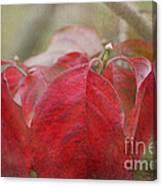 Autumn Dodwood Leaves Canvas Print